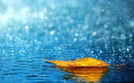 Happy Rainy Monsoon